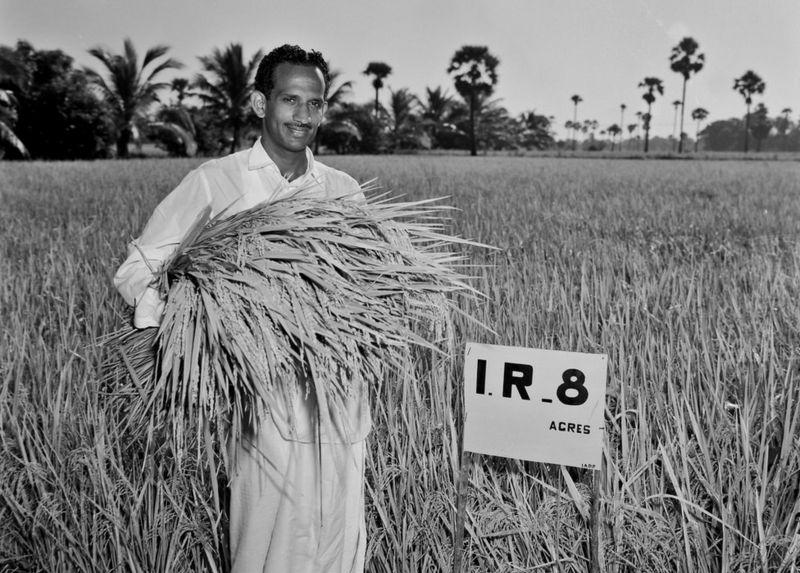Farmer holding IR8 Rice
